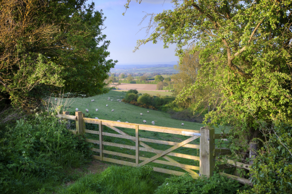 Maximising the chances of securing farm business finance